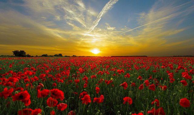 La importancia del sol en la tierra