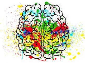 Cerebro. Psicología